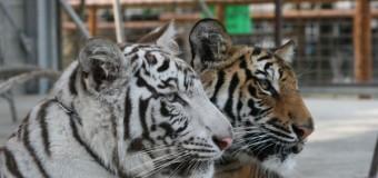 デートに人気の動物園、珍しさを求めるなら香川へ!