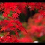 秋と言えば…紅葉!人気スポット特集【北関東編】