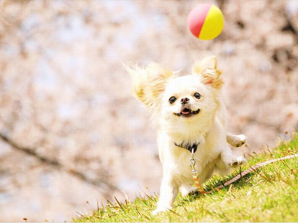 b-3_dogphoto3-1